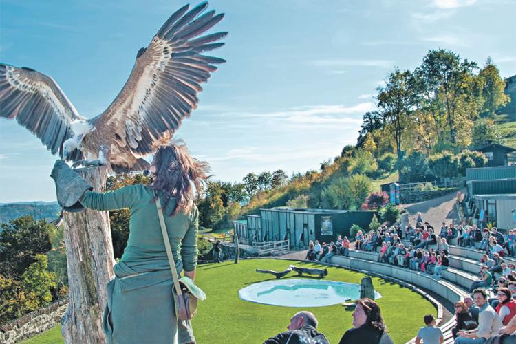 Die Greifvogelwarte auf der Burg ist ein Publikumsmagnet.